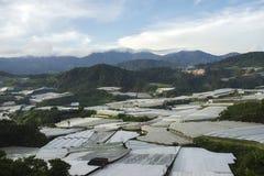 Piękny krajobraz, gronowa dolina w łagodnym zmierzchu świetle, narastający winnica Zdjęcie Royalty Free