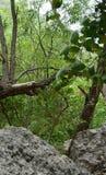 Piękny lasu pic Obrazy Stock