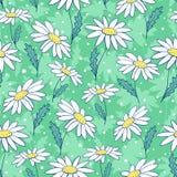Piękny rumianek kwitnie bezszwowego wzór Zdjęcia Royalty Free