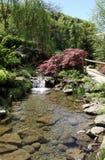 Piękny woda ogród z nadbrzeżnymi roślinami i siklawą Zdjęcie Royalty Free