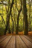 Piękny żywy złoty jesień spadku lasu krajobraz z drewnianym Obrazy Royalty Free