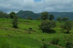 Piękny ziemia uprawna krajobraz w Indiańskiej wiosce Satara Zdjęcie Royalty Free