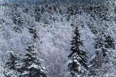 Piękny zima krajobraz w północnym Europa Obrazy Stock