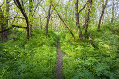 Piękny zmierzch w magicznym lasowym śladzie niebieska spowodowana pola pełne się chmura dzień zielonych roślin krajobrazu ruchu p Zdjęcie Royalty Free