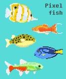 Piksla egzota ryba Zdjęcia Royalty Free
