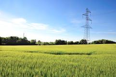 Pilão da eletricidade no campo da cevada foto de stock royalty free