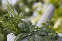 Pilão e almofariz com ervas Fotos de Stock Royalty Free