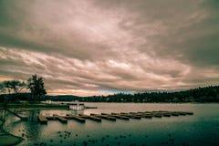Pilört sjö royaltyfria bilder