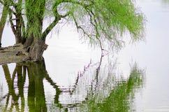 Pil över vattnet Royaltyfri Foto