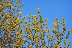 Pil i blom på den ljusa blåa himlen royaltyfria bilder