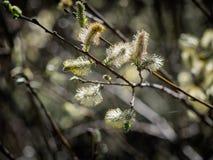 Pil i vår i en dansk naturfläck nära Vejle arkivfoton