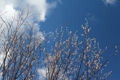 Pil mot den blåa himlen Fotografering för Bildbyråer