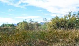 Pil och högväxt gräs Royaltyfri Fotografi