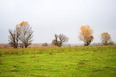 Pil- och poppelträd med gula sidor på äng för grönt gräs nära torkar vasser, skogen i horisonten, molnig regnig himmel royaltyfria foton