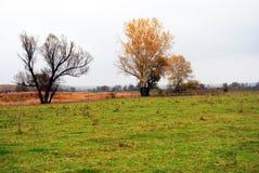 Pil- och poppelträd med gulingsidor och gräs nära torkar vasser royaltyfri bild