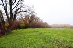 Pil- och poppelträd med gulingsidor och gräsgläntan och björkskogen på horisonten royaltyfri foto