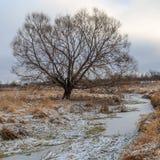 Pil på banken av The Creek som täckas med is Fotografering för Bildbyråer