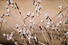 Pil på en beige bakgrund fotografering för bildbyråer