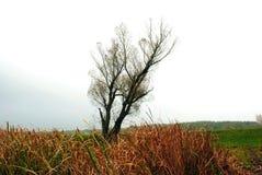 Pil utan sidor och gröna torra vasser för gräsglänta nära, molnig regnig himmel och mist royaltyfria bilder