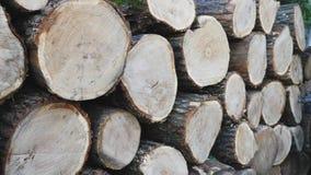 Pila con il legno del fuoco stock footage