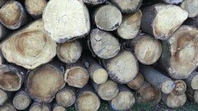 Pila con madera del fuego Registros recientemente tajados del árbol apilados para arriba encima de uno a en una pila Industria de almacen de metraje de vídeo