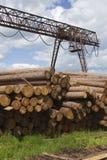 Pila dai larchs siberiani Fotografie Stock