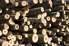 Pila de árboles imágenes de archivo libres de regalías