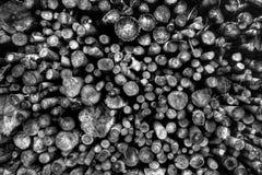 Pila de bosque cortado Foto de archivo
