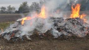 Pila de burning de la maleza metrajes