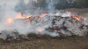 Pila de burning de la maleza almacen de metraje de vídeo