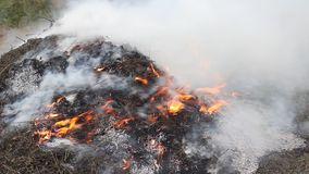 Pila de burning de la maleza almacen de video