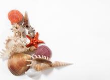 Pila de cáscaras y de estrellas de mar Imagenes de archivo
