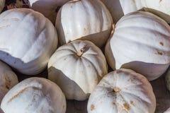 Pila de calabazas del albino de la cosecha Fotografía de archivo