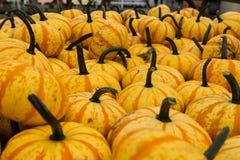 Pila de calabazas de la naranja de la cosecha Imágenes de archivo libres de regalías