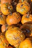 Pila de calabazas verrugosas anaranjadas de la cosecha Imágenes de archivo libres de regalías