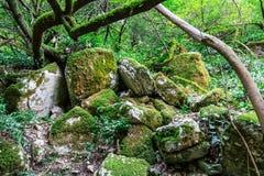 Pila de cantos rodados en bosque Imagenes de archivo