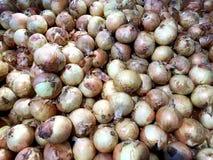Pila de cebollas frescas Fotos de archivo libres de regalías