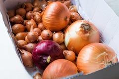Pila de cebollas orgánicas frescas en caja del cartón con los bulbos fotografía de archivo