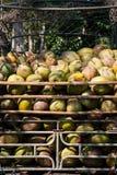 Pila de cocos verdes Foto de archivo