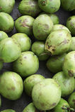 Pila de cocos verdes frescos Imagenes de archivo