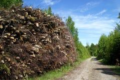 Pila de combustible de madera por el camino forestal Imagen de archivo libre de regalías