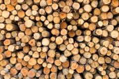Pila de corte de los troncos de árbol Imagen de archivo