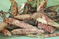 Pila de espigas de trigo mohosas Fotografía de archivo libre de regalías