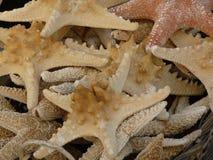 Pila de estrellas de mar Fotos de archivo