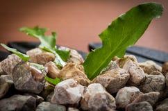 Pila de guijarros en un cuenco con las hojas verdes Fotos de archivo