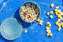Pila de gusanos en la caja para pescar Imagenes de archivo