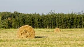 Pila de heno en el campo en un fondo del bosque y del cielo verdes Imagenes de archivo