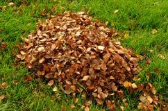 Pila de hoja del abedul en otoño Imagen de archivo