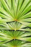 Pila de hoja de palma verde imágenes de archivo libres de regalías