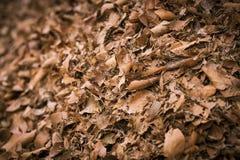 Pila de hojas de otoño Fotografía de archivo